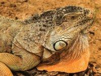 curious reptiles