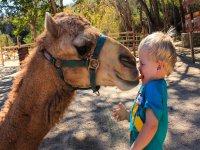 Dale un beso a nuestros camellos
