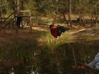 Mono bridge on the lake