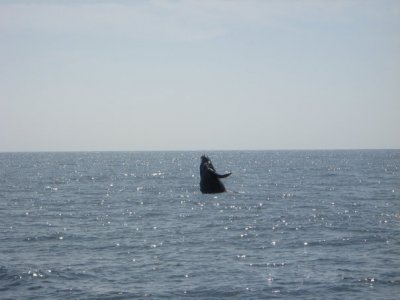 Punta Mita Surf Whale Watching