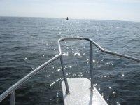 Punta Mita Surf con ballenas