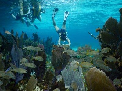 Cozumel Best Excursions Snorkel