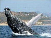 Watching of cetaceans