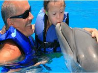 Activity with dolphins