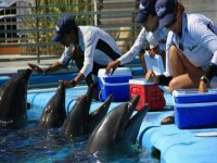 Training the dolphins