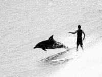 Surfear con delfines