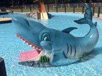 The shark of the children