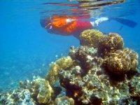 Snorkeling between fish