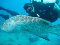 Discover the flora and fauna underwater