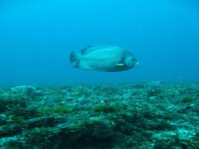 Sea Hawk Divers Snorkel