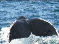 Tour de ballenas