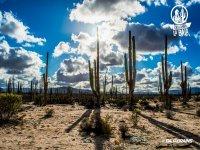 Ensenada Desert