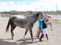 Rider with his horse in Queretaro