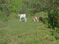 ecopark with animals Cazatlan