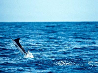 Ecoturismo Vermar Pesca