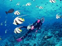 Enjoying the sea with diving