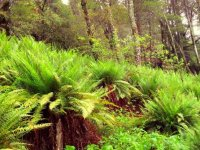 vegetation thick