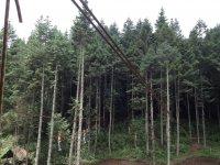 Mira todo el circuito en medio del bosque