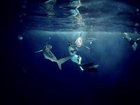 incredible underwater views