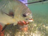 Fishing in the Caribbean, Permit fishing