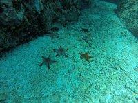 The sea stars of the area