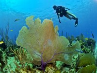 Admire the corals and their beauty