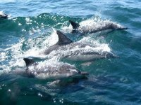 Watch how they swim among them