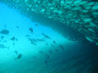 Banks of fish