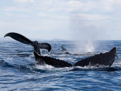 Aqua los cabos Whale Watching