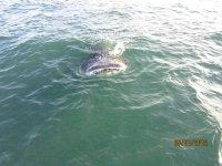 Whaling logs