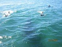 Snorkel en mar abierto