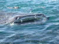 Snorkeling excursions