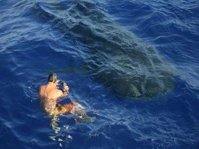 Tours LaPaz Tiburon Ballena Whale Watching