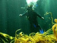 Aquatic vegetation