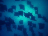 Belleza submarina