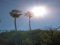 Biosfera Sierra La Laguna