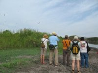 Mangrove excursions