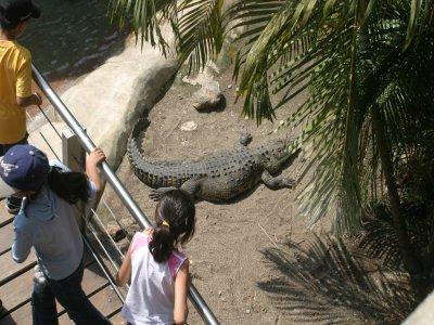 Zoológico Guadalajara Campamentos Multiaventura