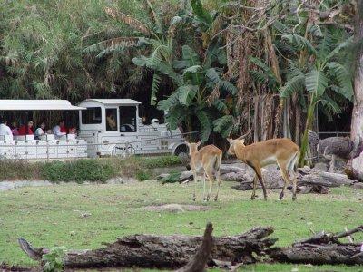 Zoológico Guadalajara Safaris