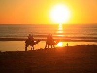 Recorre la playa de Los cabos en un Camello