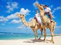 Una increíble experiencia en Camello