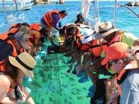 Explora el mundo marino sin necesidad de nadar