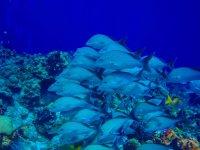 Hermosos bancos de peces
