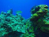 Arrecifes en el Caribe mexicano
