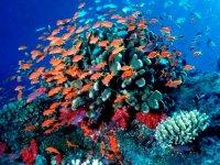 Cozumel y sus bellezas marinas