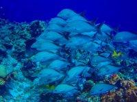 Mundo marino en el Caribe