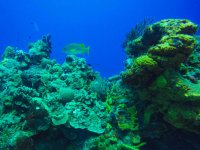 Arrecifes en el Caribe
