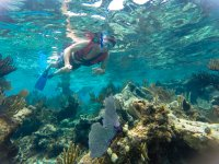 Snorkel en arrecifes del Mar Caribe