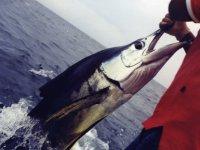 Sailfish in fishing