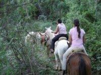 Horseback riding in nature